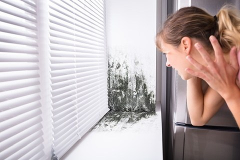 Taking on mold and mildew in your home.